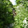 Тропа на гору Ачишхо