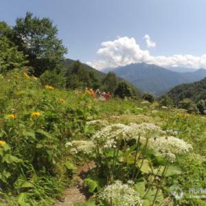Летний тур на Красную Поляну с походами. Зеленые склоны Ачишхо