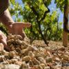Почвы виноградника